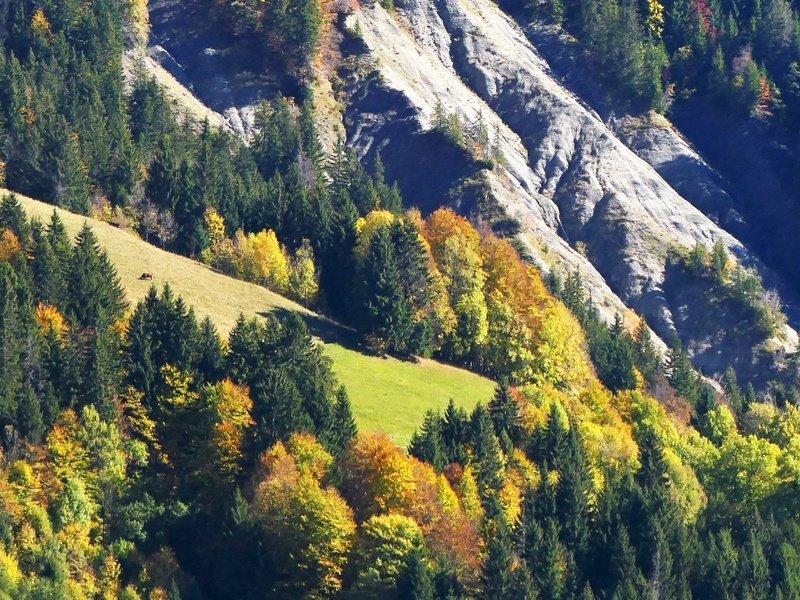 forets automne été indien Grand Bornand sentiers vttae