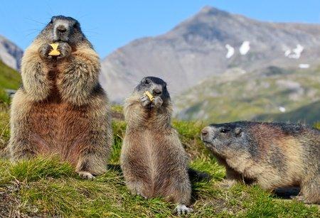 Marmotte Futée Assurance Casse et Vol VTTAE